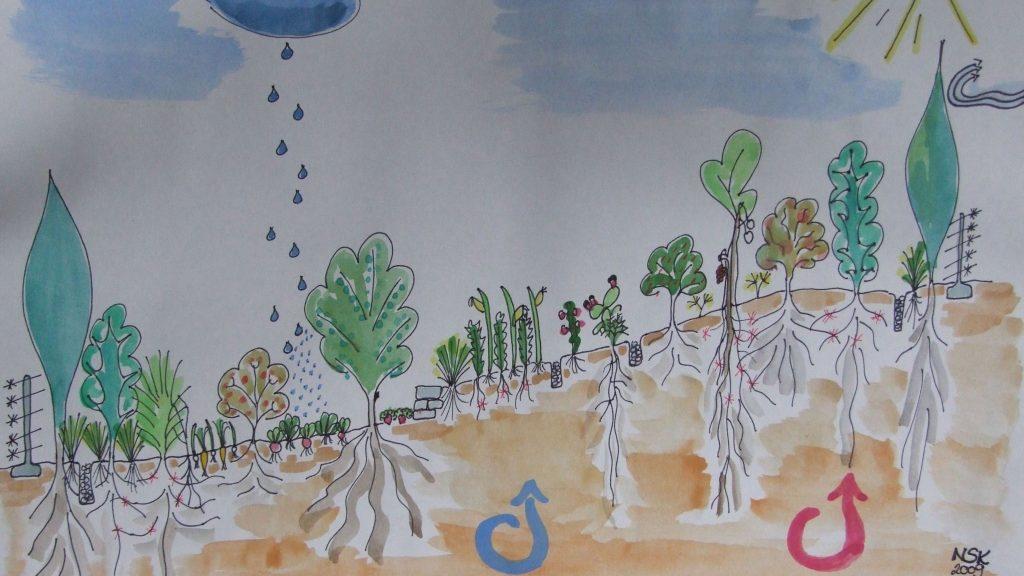 Schaubild Dynamischer Agroforst